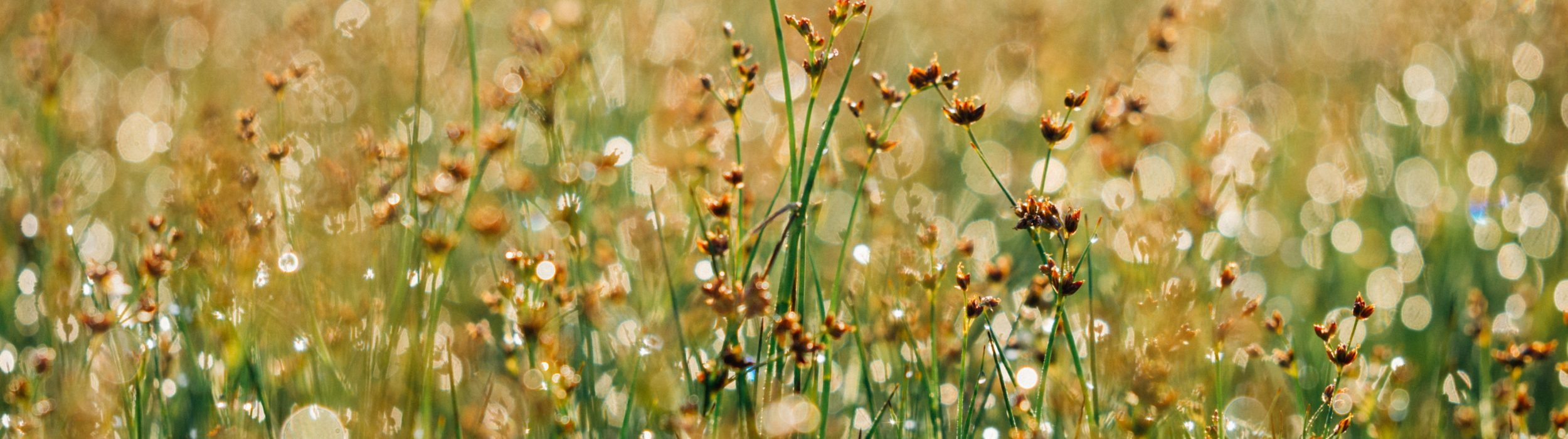 floral-865823